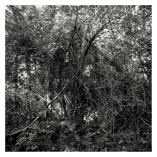 Maison dans la forêt © Stéphane Louis, VII. 09