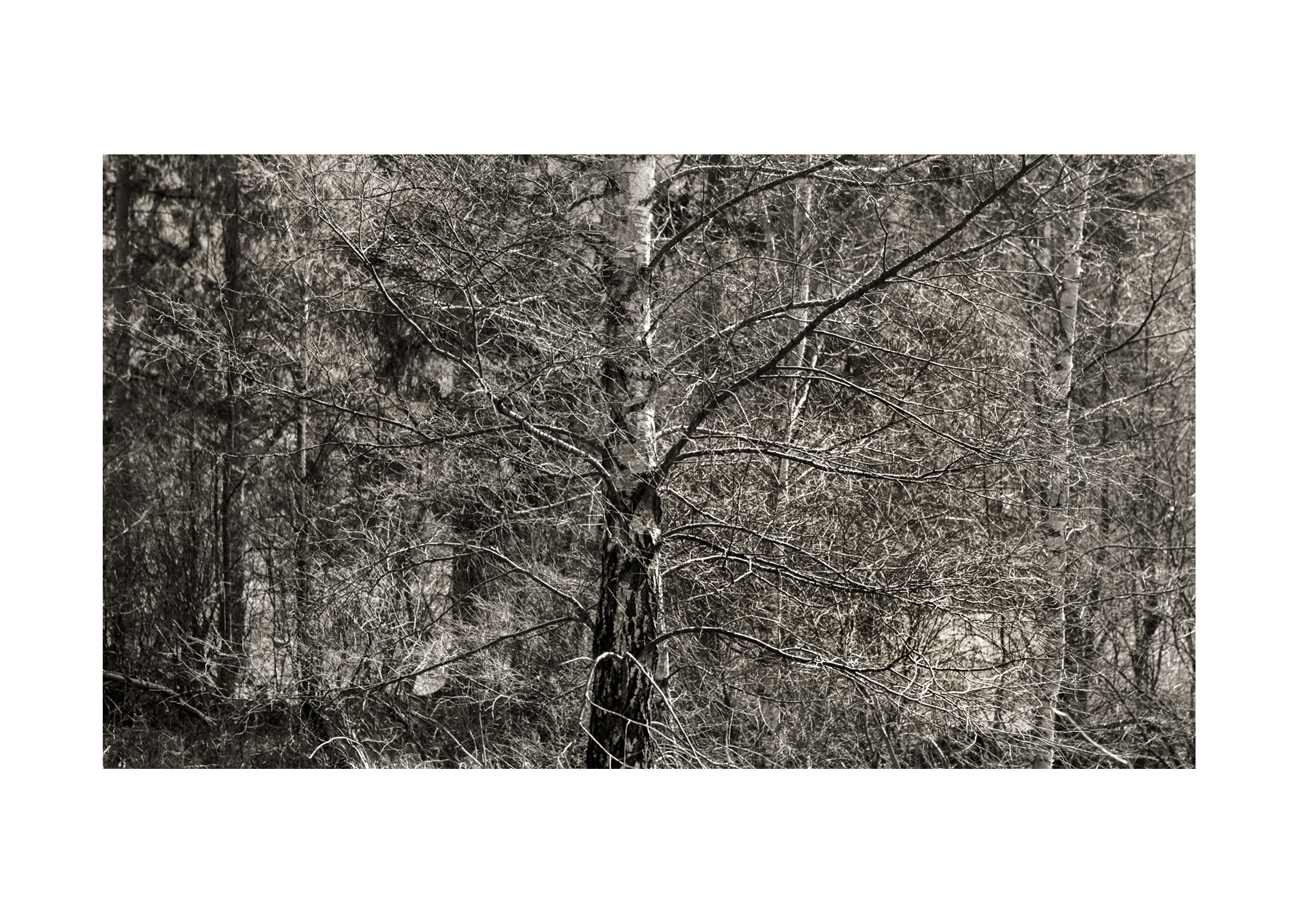 Paysage-Archétype #4 : Forêt © Stéphane Louis, IV. 18