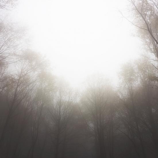 Forêt de Mollkirch © Stéphane Louis, 2014