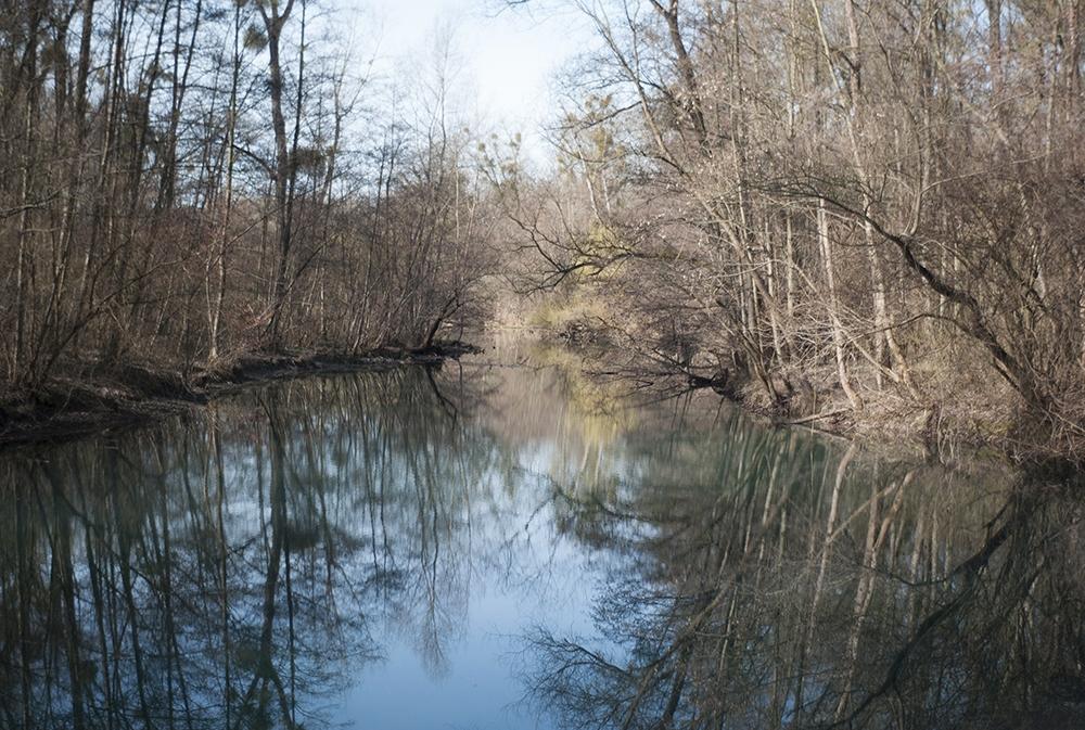 Forêt de la Robertsau © Stéphane Louis, 2017