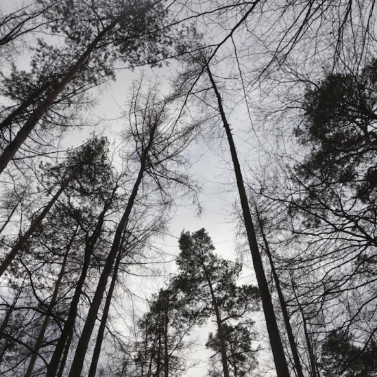 Outre-Forêt © Stéphane Louis, 2013