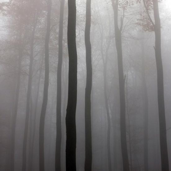 Wasserwald © Stéphane Louis, 2012