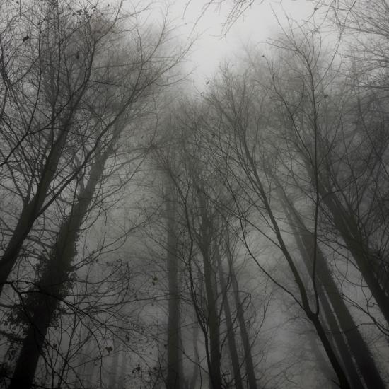Forêt autour du Mont Ste Odile © Stéphane Louis, 2013