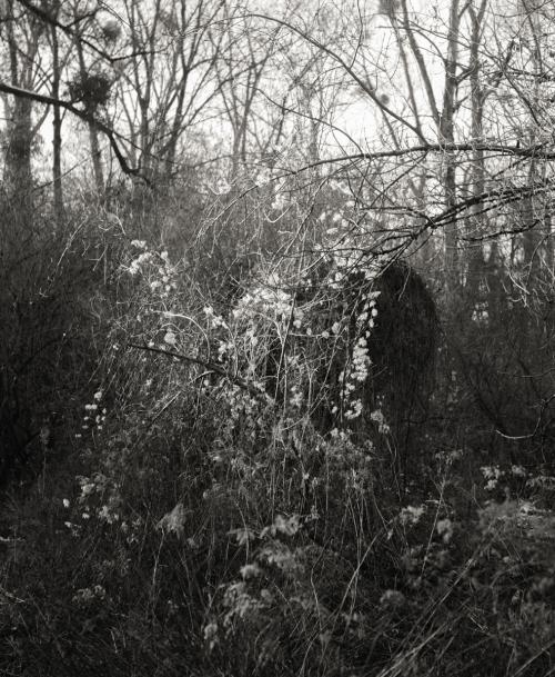 Forêt alluviale rhénane © Stéphane Louis, II. 18