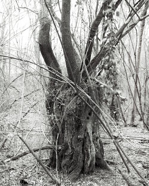 Forêt rhénane © Stéphane Louis, 2016
