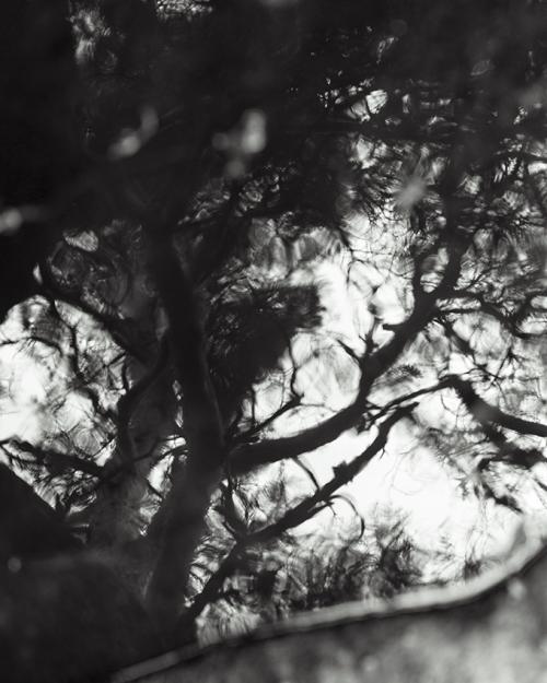 Reflet © Stéphane Louis, 2016