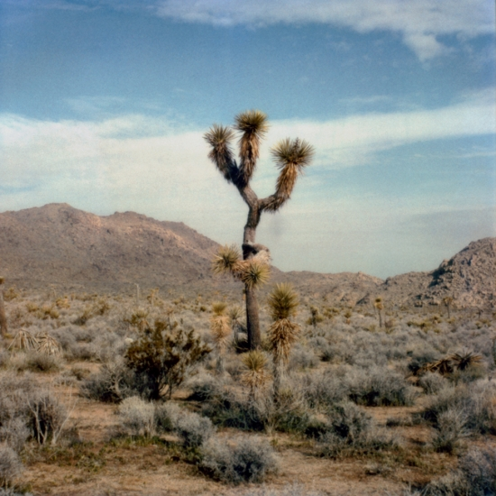 Joshua Tree National Park, Californie © Stéphane Louis, 2005